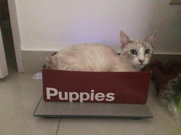 Надпись на коробке: щеночки
