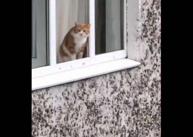 """""""Не прыгай!"""": Психологическая помощь коту"""