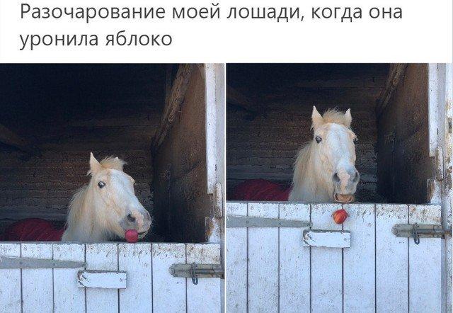 """Животные, которые поняли значение слова """"провал"""""""