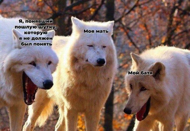 Новый мем про смеющихся волков взрывает социальные сети