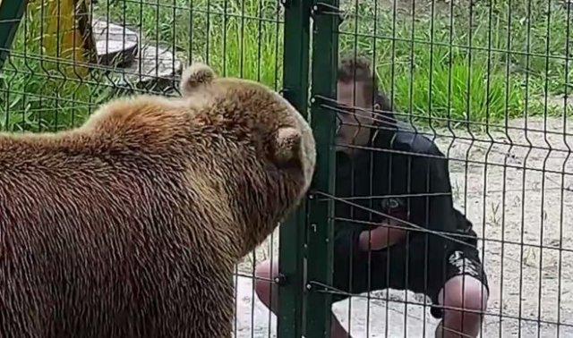Плюнул в лицо медведю