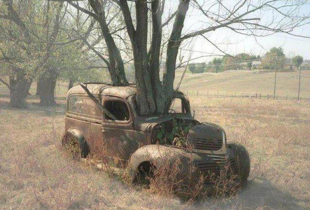 """Деревья, которые готовы """"сожрать"""" все вокруг"""