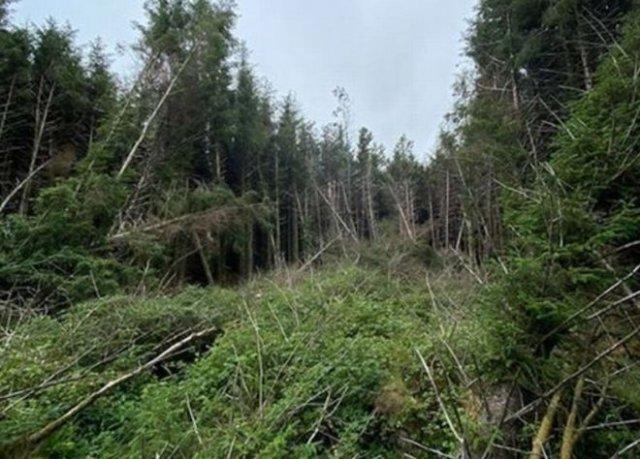 Фотограф нашел странное место в лесу и заявил, что здесь могло упасть НЛО