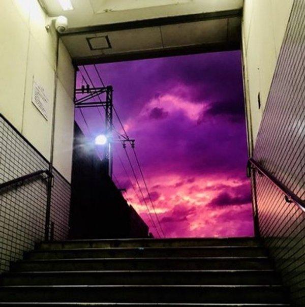 Оттенки фиолетового во всей красе