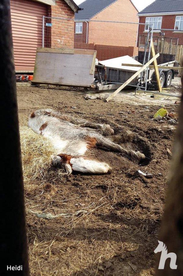 Лошадь Хайди