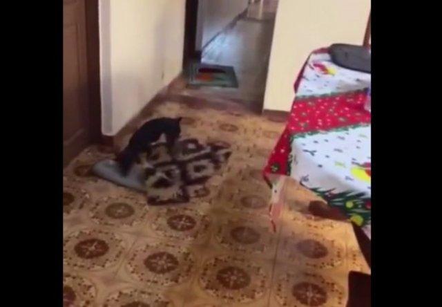Умный пес убирает ковры, когда привозят женщину на коляске