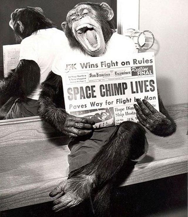 Шимпанзе Хэм