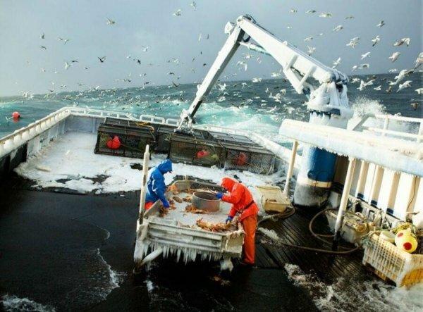 Рабочие будни краболовов в северных морях