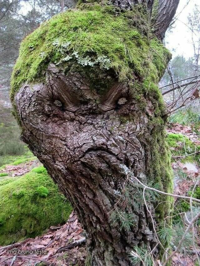 Парейдолия: наш мозг видит лица там, где их нет