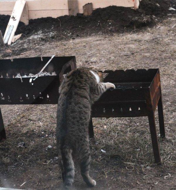 Подборка забавных котов-помощников