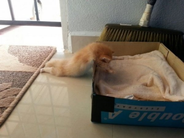 Коты, которые очень устали после трудного рабочего дня