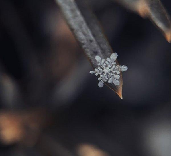Волшебная макросъемка снежинки