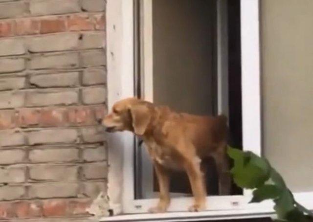 """Уговаривали пса не прыгать и предлагали пиво, когда появился хозяин и """"разрядил"""" обстановку"""