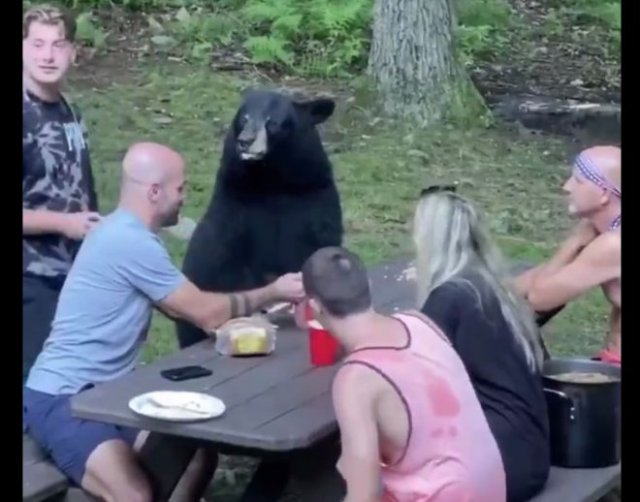 Не только русские дружат с медведями
