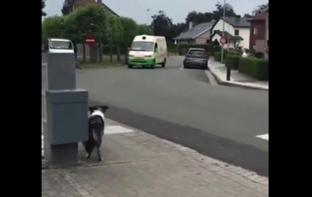 Пёс забавно встречает мороженщика