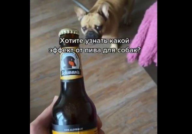 Что будет, если угостить собаку пивом?