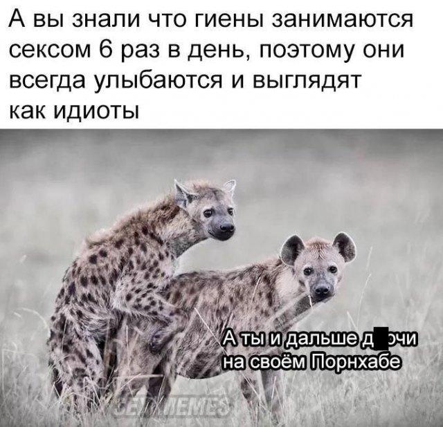 мем про животных