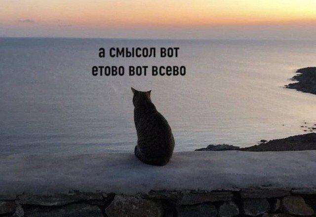Кот сидит на скале перед морем и философствует
