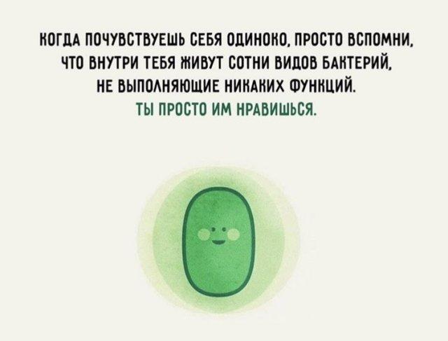 Шутка про бактерии в человеке