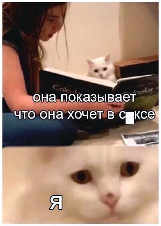 мем про секс