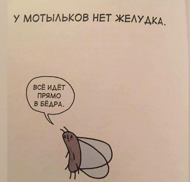 Грустные факты о животных Брука Баркера мотыльки