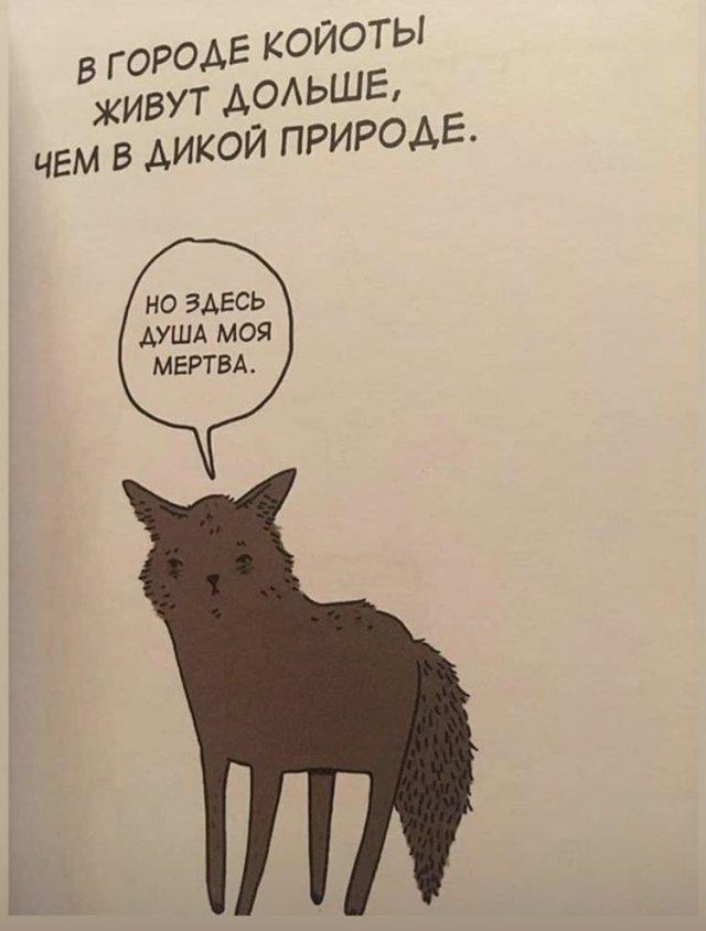 Грустные факты о животных Брука Баркера волки