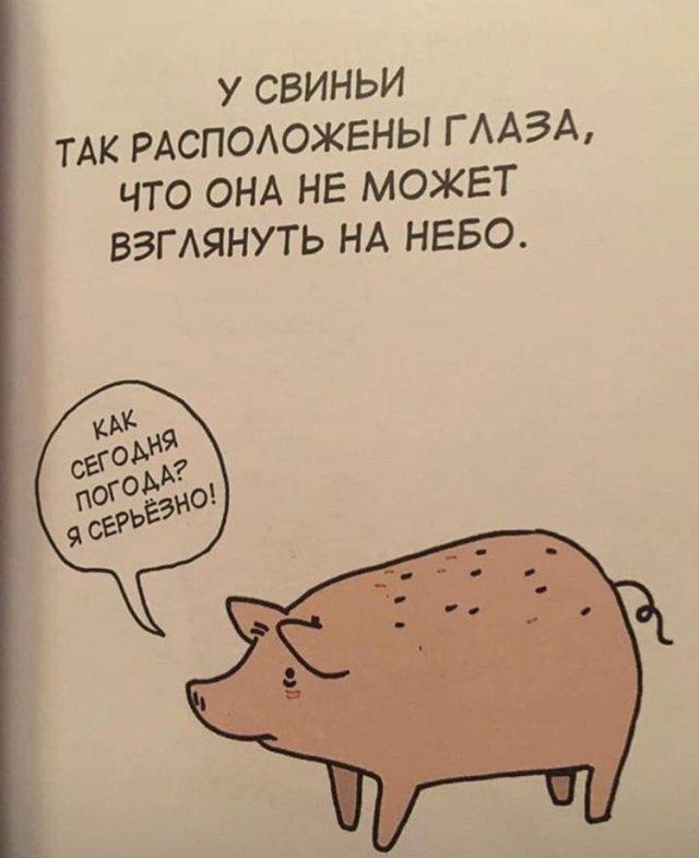 Грустные факты о животных Брука Баркера свинья