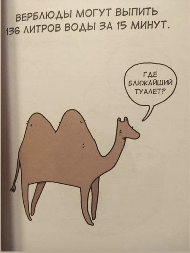 Грустные факты о животных Брука Баркера - верблюд