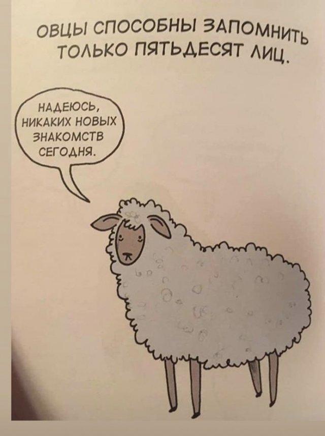 Грустные факты о животных Брука Баркера - овца