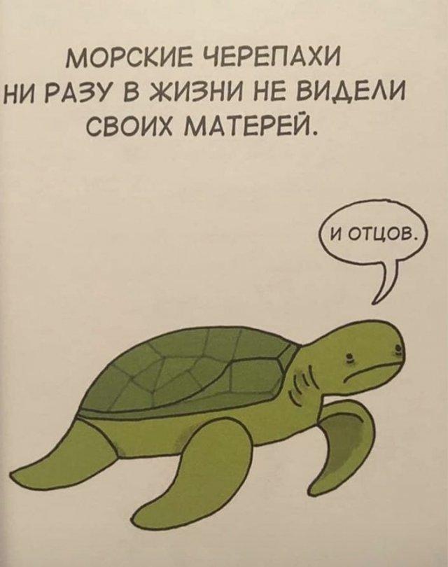 Грустные факты о животных Брука Баркера - черепаха