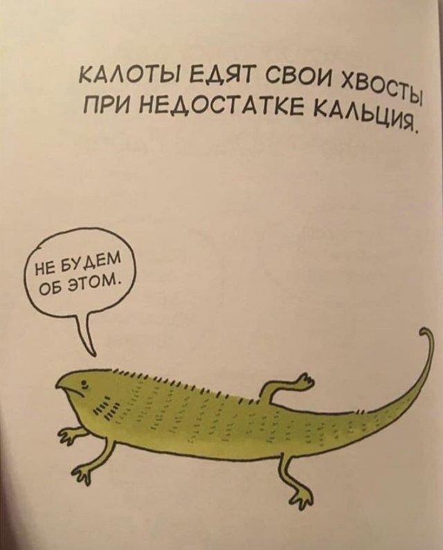 Грустные факты о животных Брука Баркера - калот