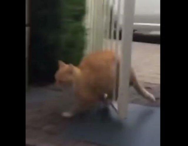 Кот против калитки