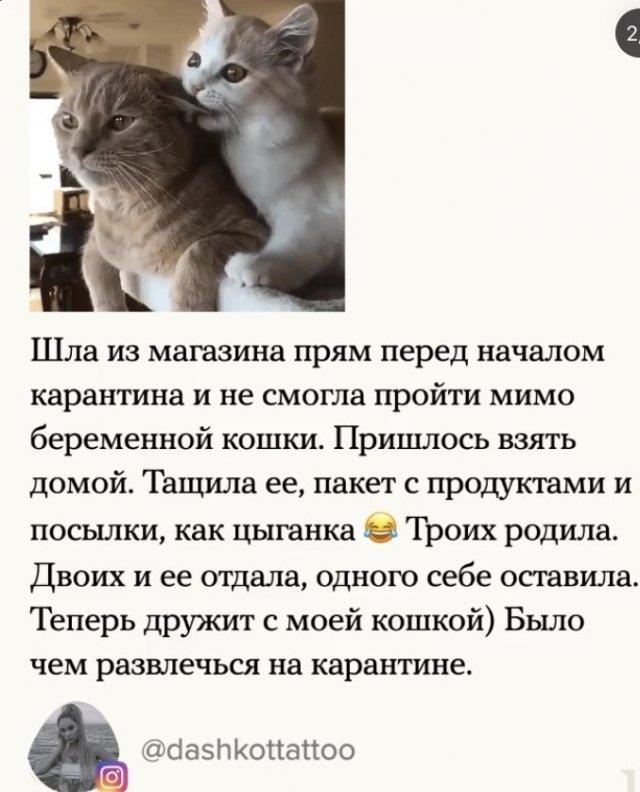Девушка спасла беременную кошку