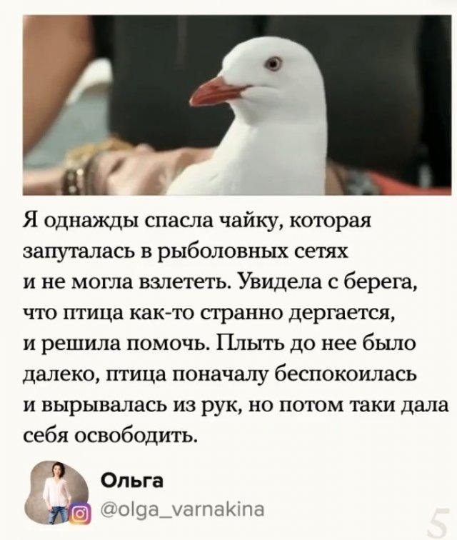 Мужчина спас чайку