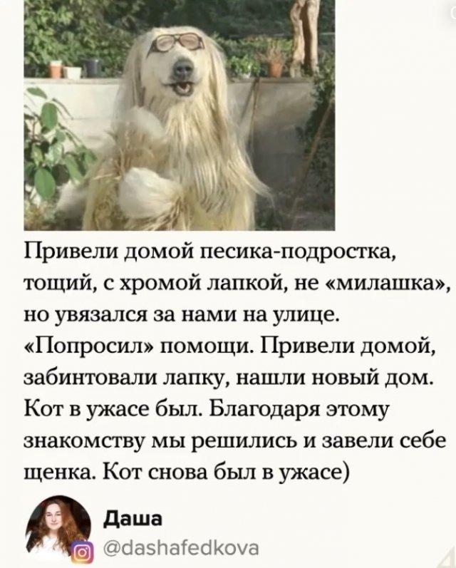 Спасли собаку, а кот был недоволен