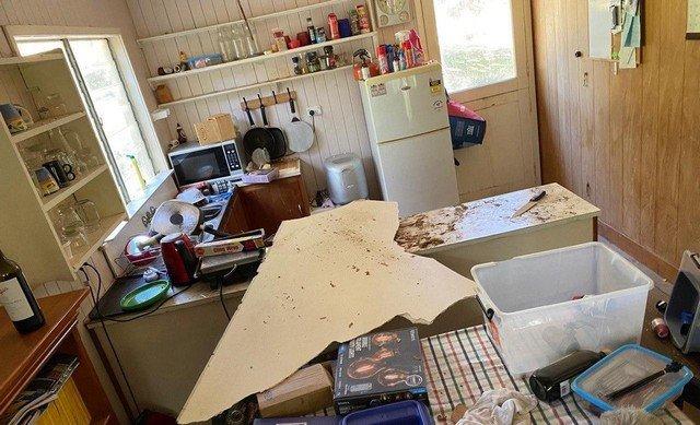 Дэвид Тейт обнаружил двух питонов у себя дома
