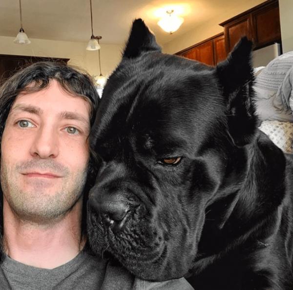 Сравнение человеческой головы с мордой собаки породы кане-корсо
