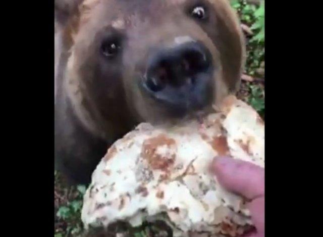 Накормил медведя блинами