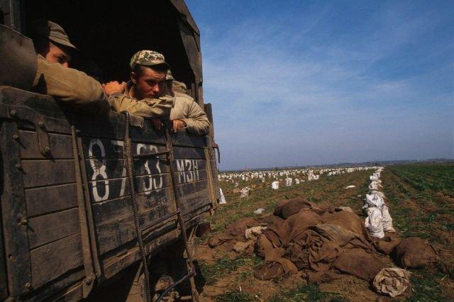 Армия используется для уборки картофеля, 1998 год.