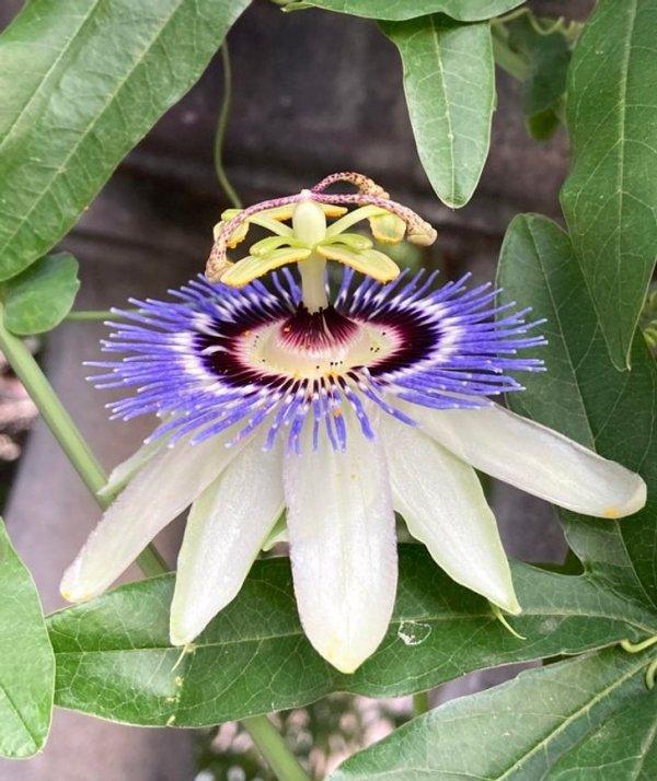 Этот цветок будто собран из частей 4 разных растений