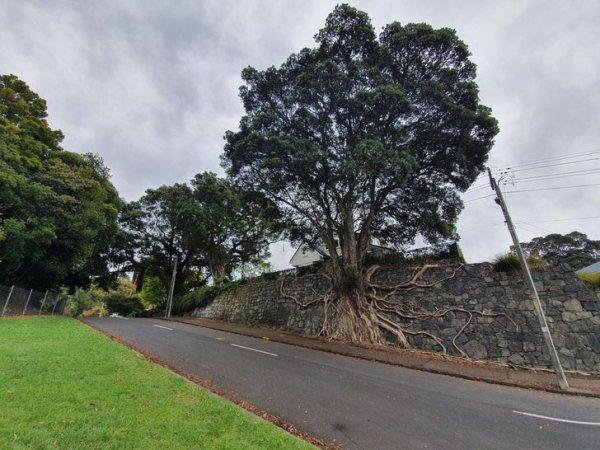 Такое ощущение, что это дерево растет прямо из стены