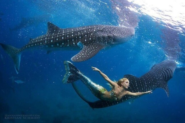 Ханна Фрейзер - плавает с китами