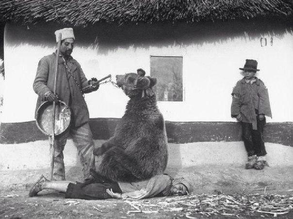 Лечение спины медведем. Румыния, 1946 год