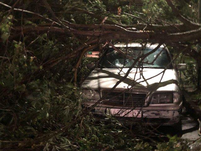 Мерседес пострадал от упавшего дерева