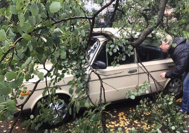 """Мужчина смотрит """"Жигули"""", на который упало дерево"""