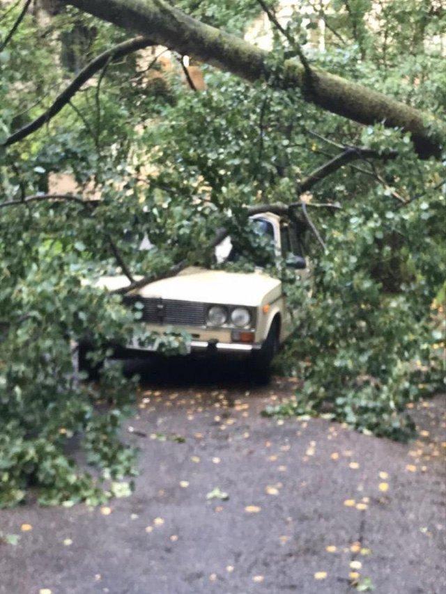 Дерево упало на Жигули