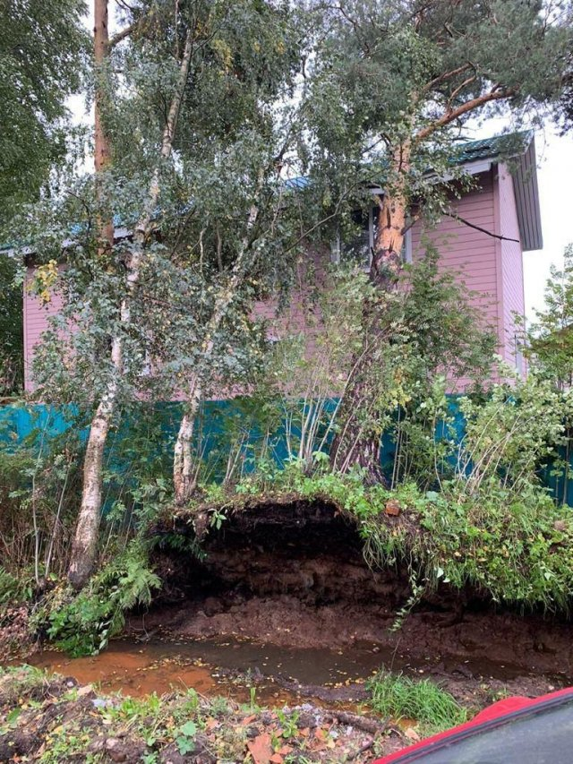 Дерево упало на дом в Лисьем Носу
