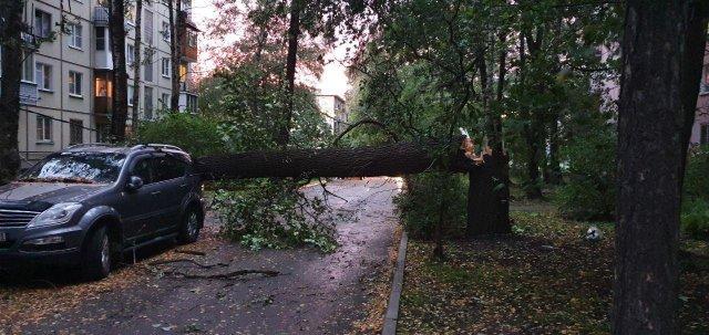 Дерево упало на Новочеркасском проспекте