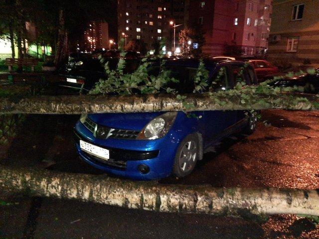 Дерево упало на Логан