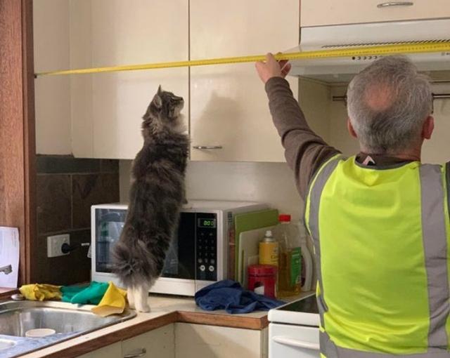 Пора обновлять кухню и кошка уже начала делать замеры